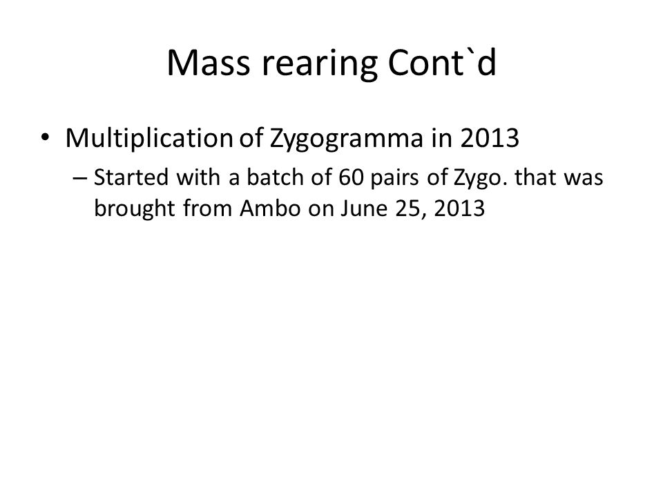 Mass rearing Cont`d Multiplication of Zygogramma in 2013