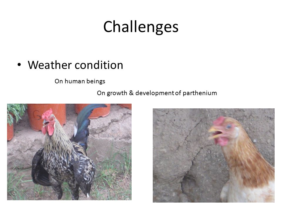 Challenges Weather condition On human beings