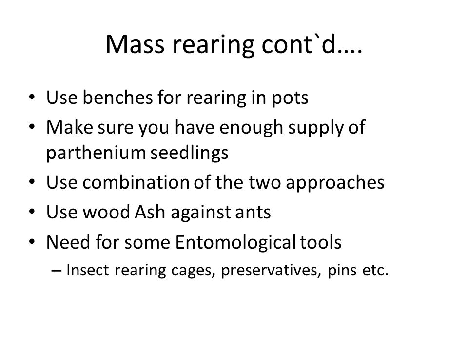 Mass rearing cont`d…. Use benches for rearing in pots
