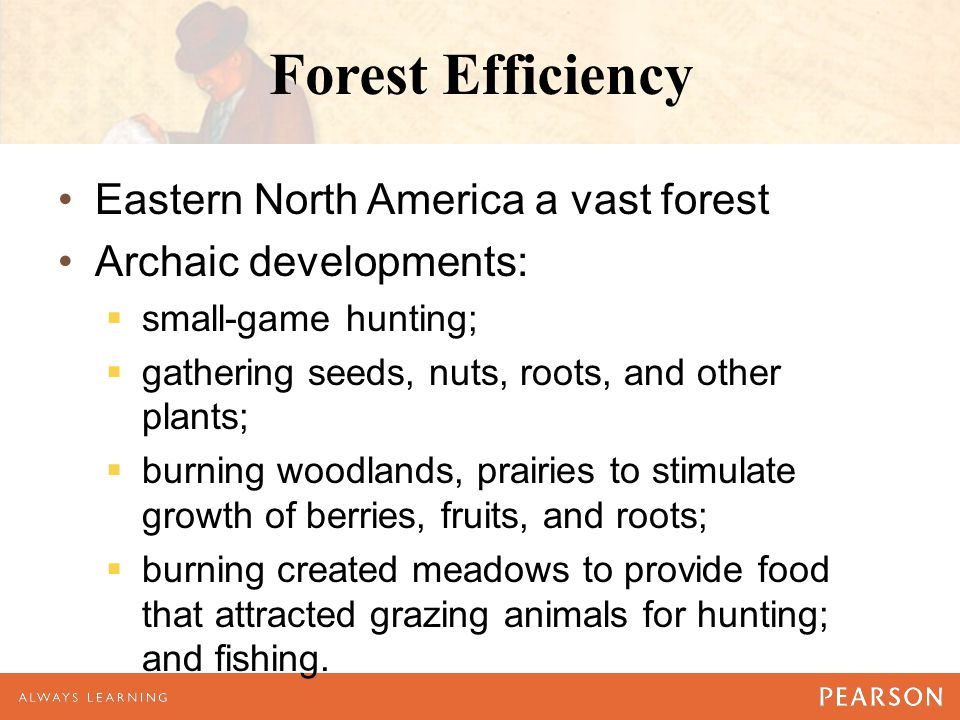 Forest Efficiency Eastern North America a vast forest