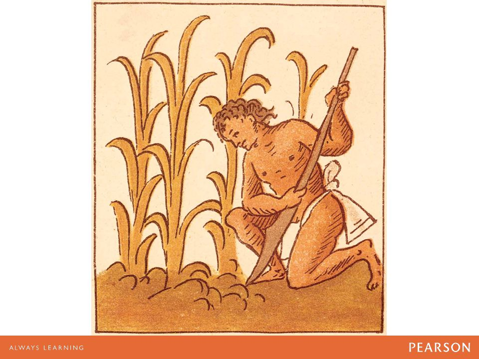 Mesoamerican maize cultivation, as illustrated by an Aztec artist for the Florentine Codex