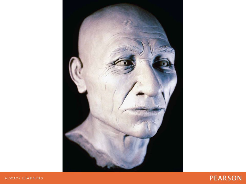 Bust from the skull of Kennewick Man