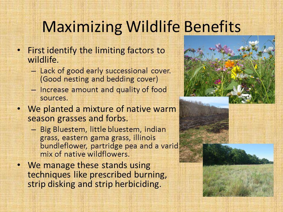 Maximizing Wildlife Benefits