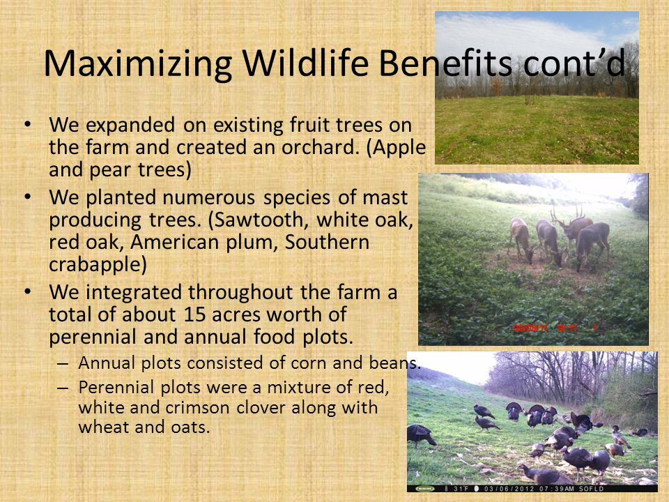 Maximizing Wildlife Benefits cont'd