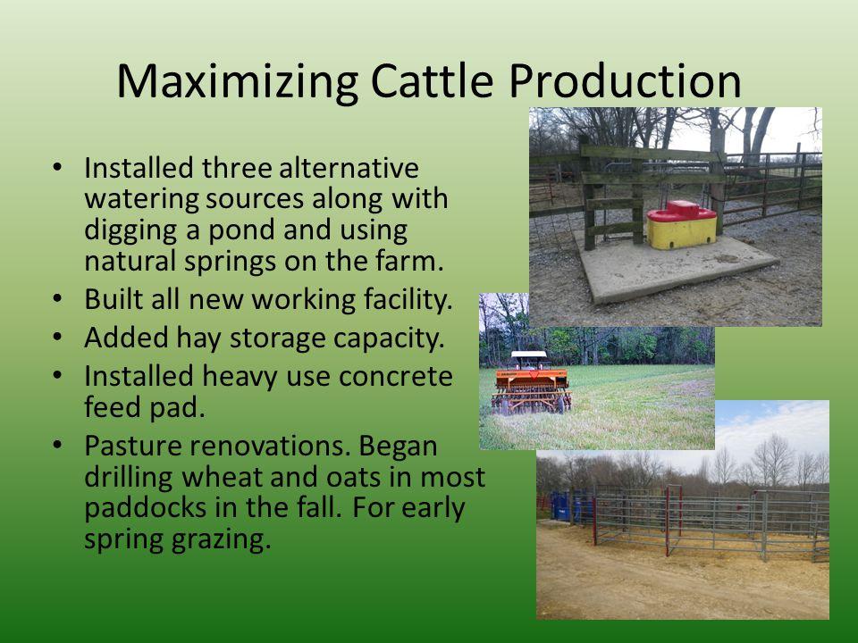 Maximizing Cattle Production