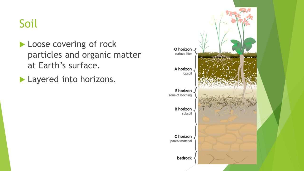 Soil Loose covering of rock particles and organic matter at Earth's surface.