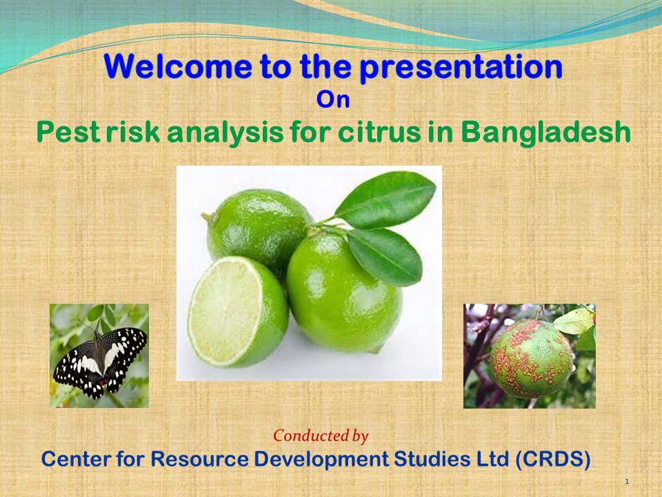 Welcome to the presentation On Pest risk analysis for citrus in Bangladesh