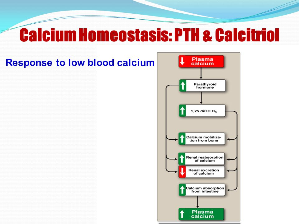 Calcium Homeostasis: PTH & Calcitriol