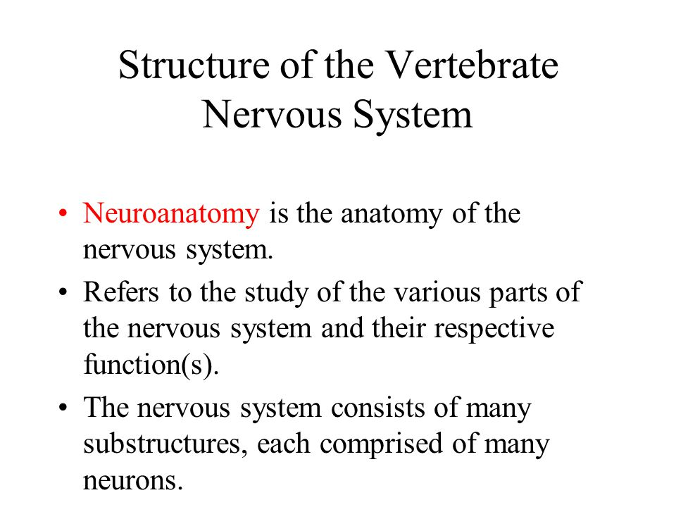 Structure of the Vertebrate Nervous System