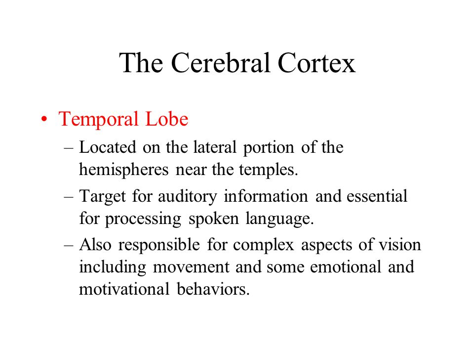 The Cerebral Cortex Temporal Lobe