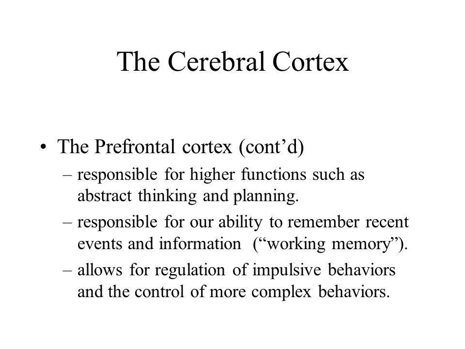 The Cerebral Cortex The Prefrontal cortex (cont'd)
