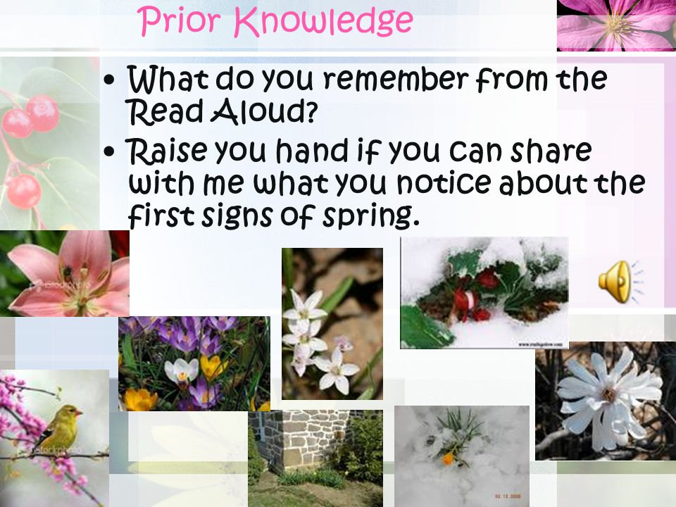 Prior Knowledge What do you remember from the Read Aloud