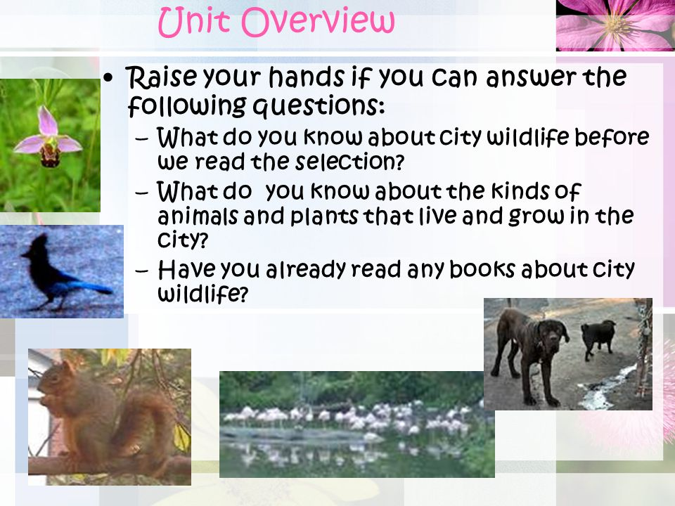 Unit Overview Raise your hands if you can answer the following questions: What do you know about city wildlife before we read the selection