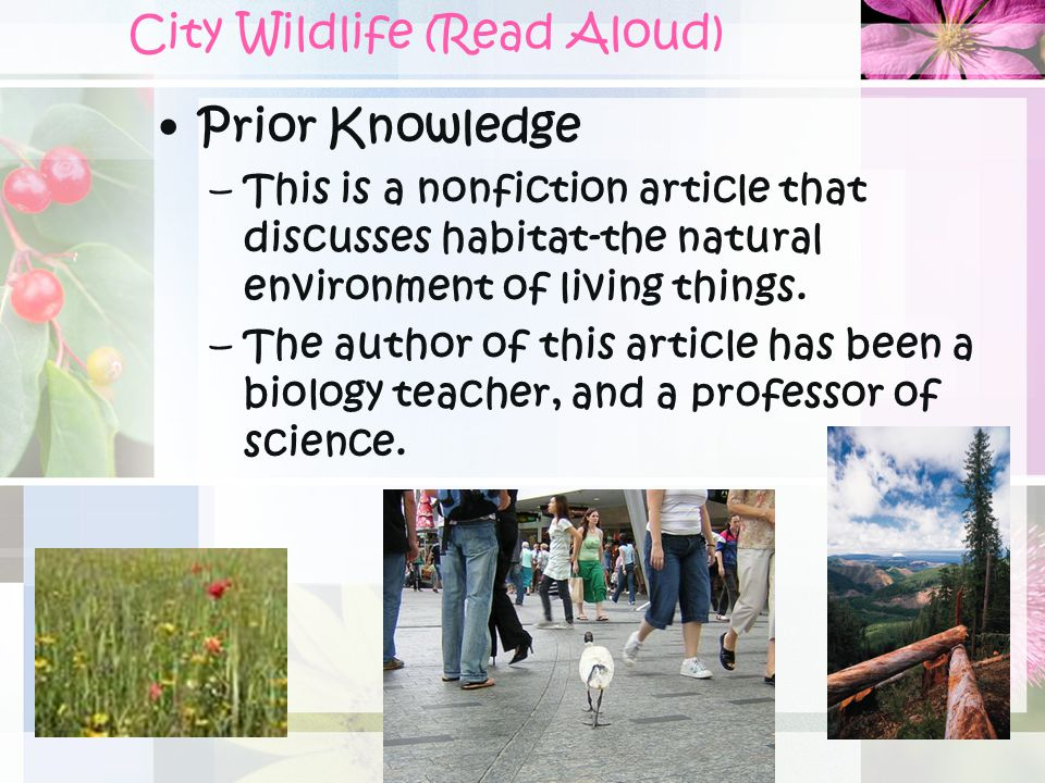 City Wildlife (Read Aloud)