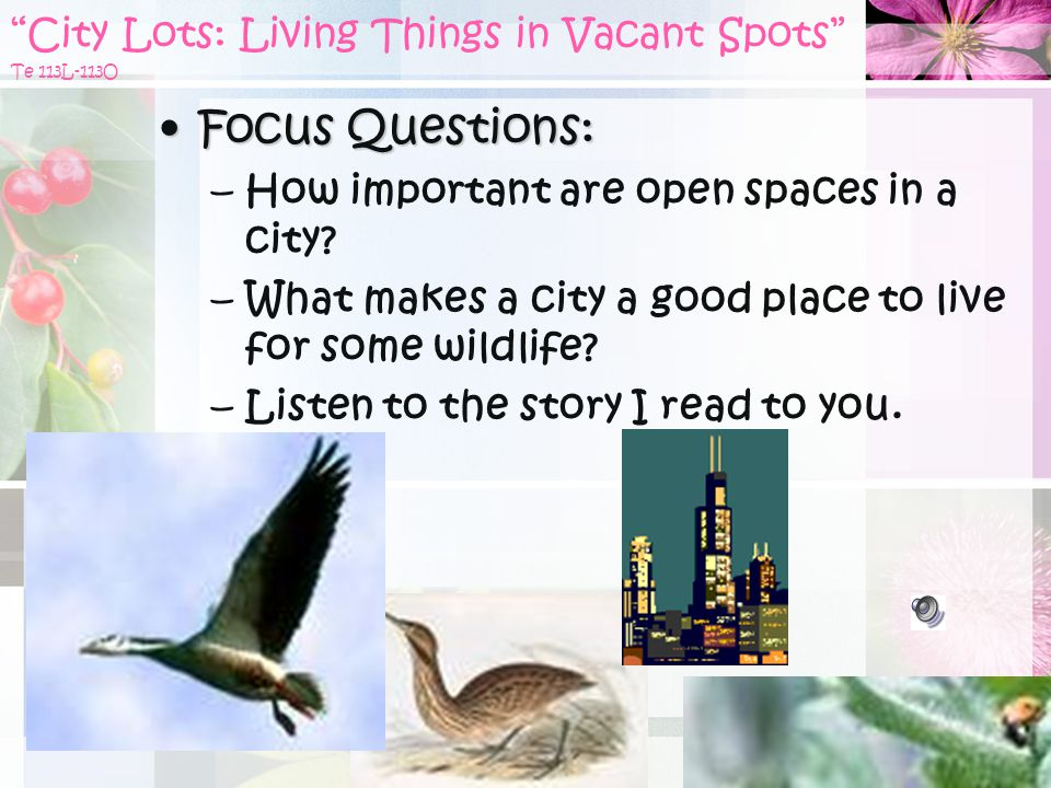 City Lots: Living Things in Vacant Spots Te 113L-113O