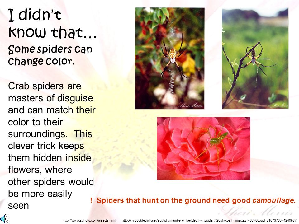 ! Spiders that hunt on the ground need good camouflage.