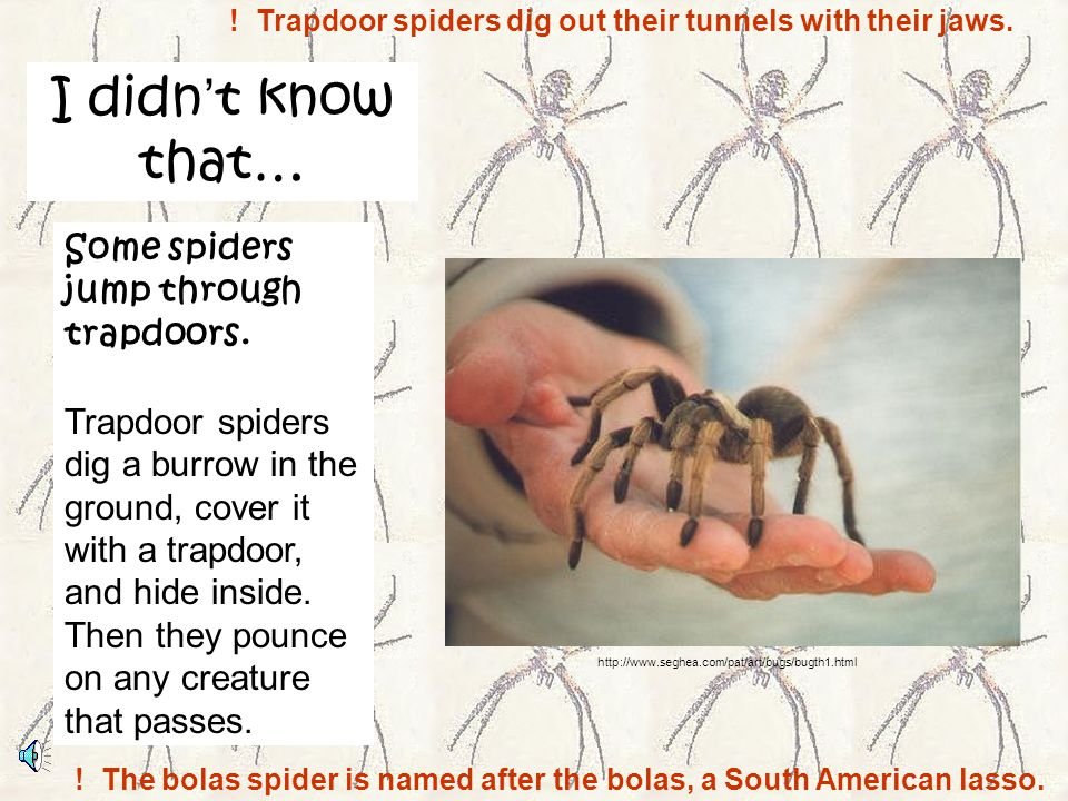 I didn't know that… Some spiders jump through trapdoors.