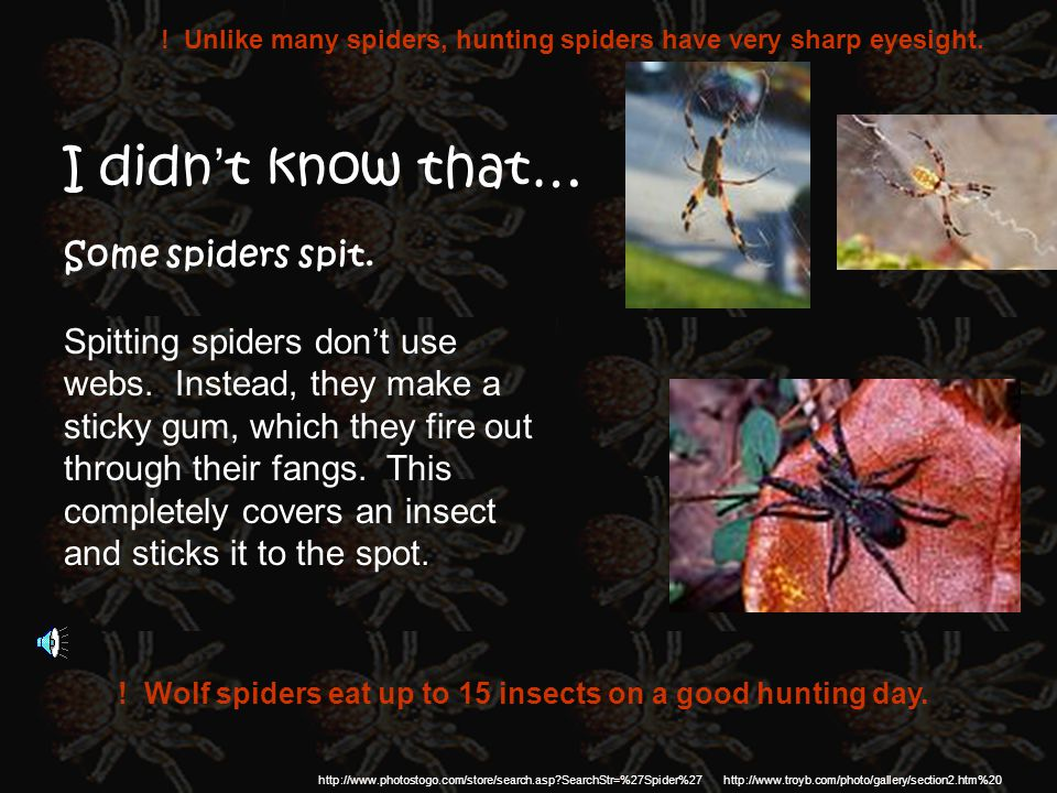 I didn't know that… Some spiders spit.