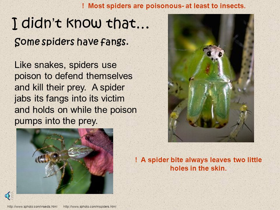 I didn't know that… Some spiders have fangs.