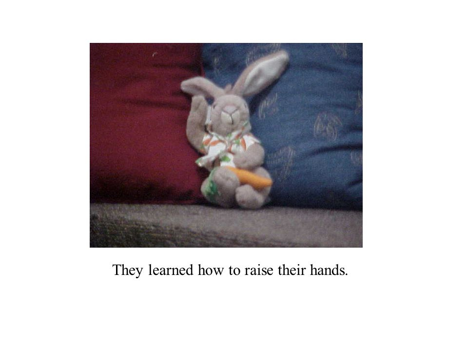They learned how to raise their hands.
