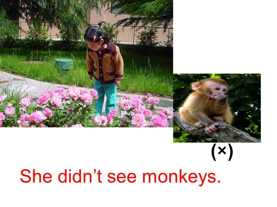 (×) She didn't see monkeys.