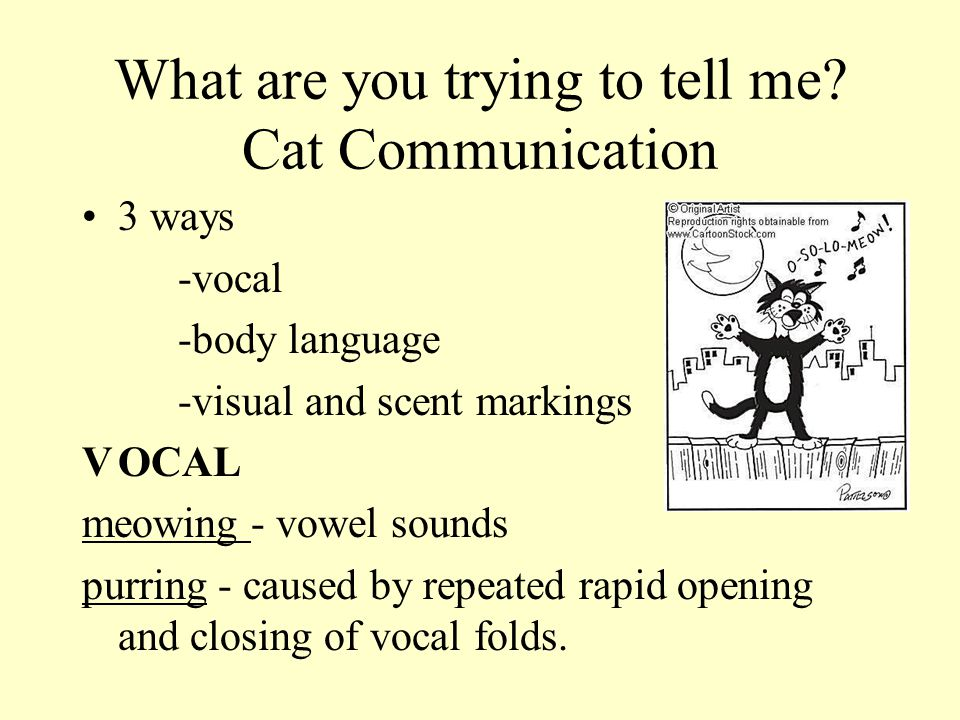 What are you trying to tell me Cat Communication