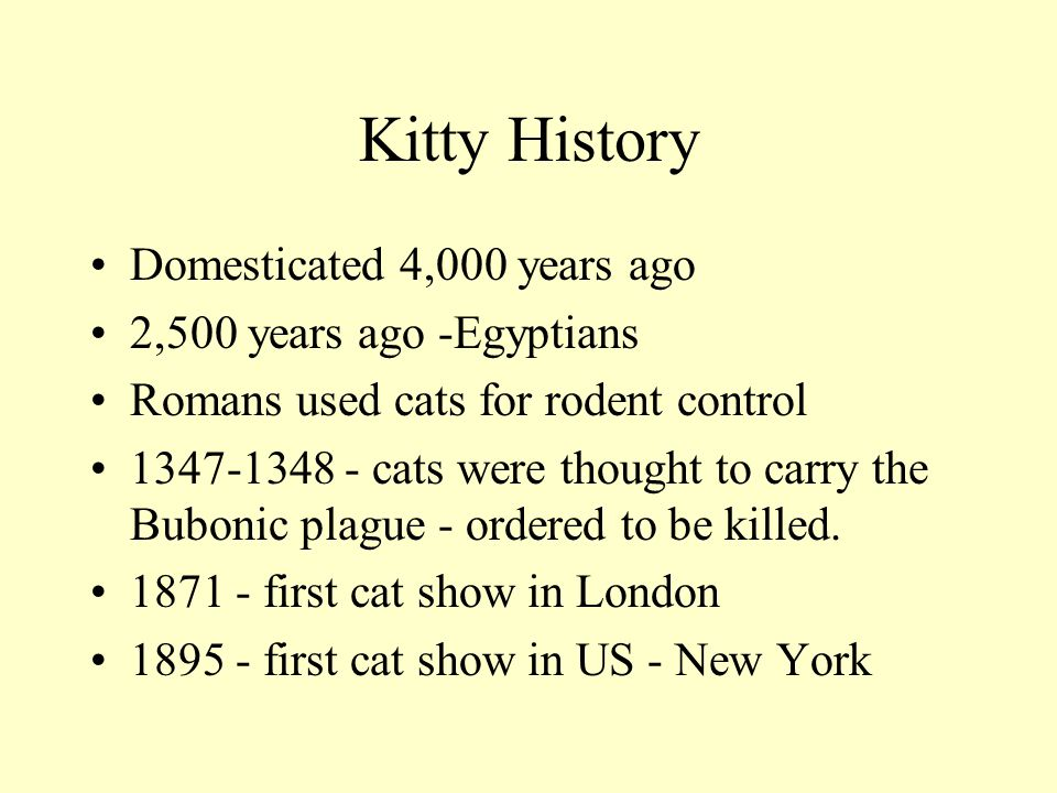 Kitty History Domesticated 4,000 years ago 2,500 years ago -Egyptians