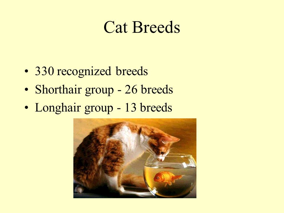 Cat Breeds 330 recognized breeds Shorthair group - 26 breeds