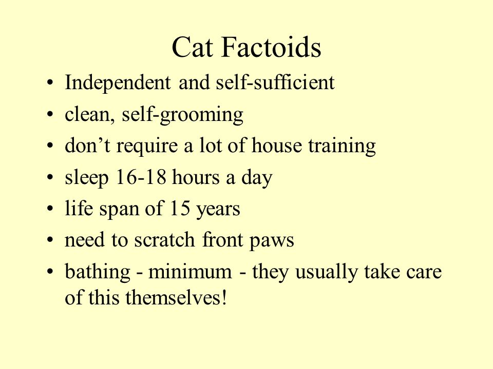 Cat Factoids Independent and self-sufficient clean, self-grooming