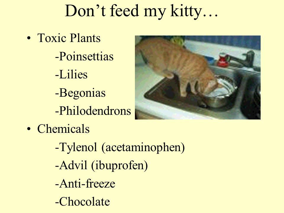 Don't feed my kitty… Toxic Plants -Poinsettias -Lilies -Begonias