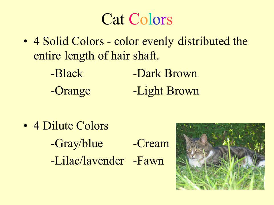 Cat Colors 4 Solid Colors - color evenly distributed the entire length of hair shaft. -Black -Dark Brown.