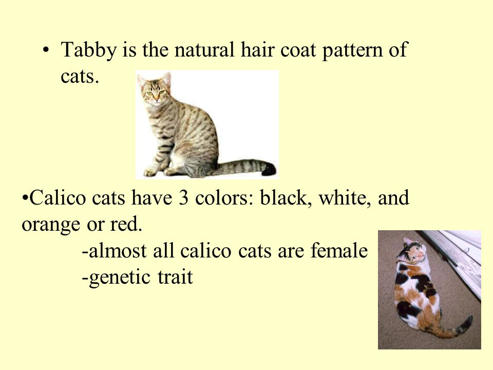 Tabby is the natural hair coat pattern of cats.