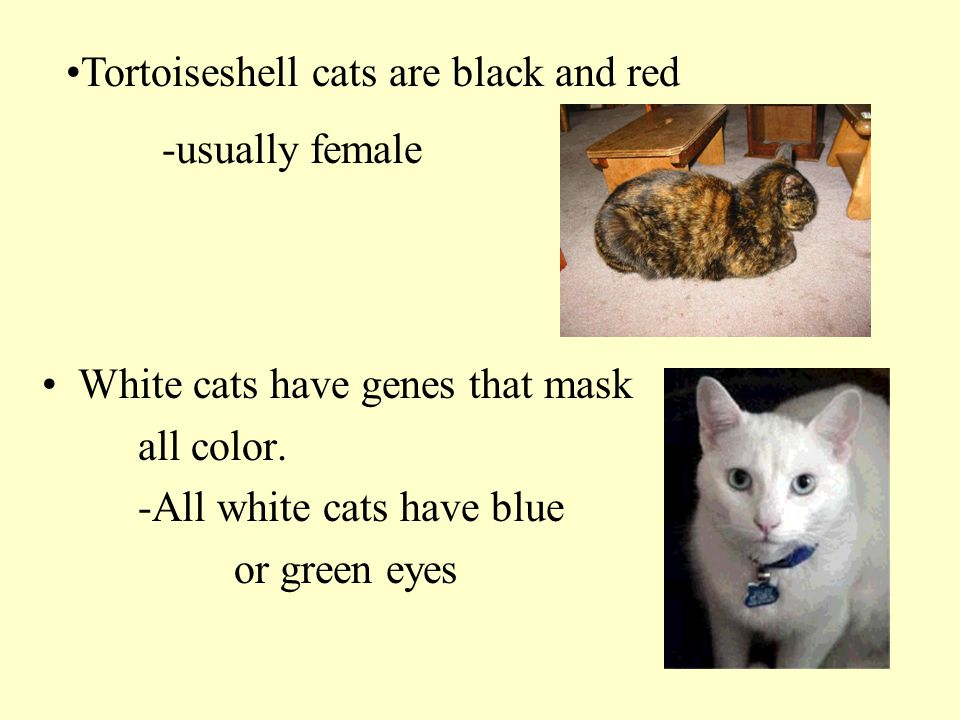 Tortoiseshell cats are black and red