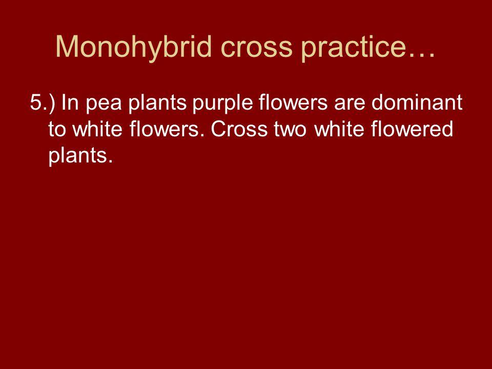 Monohybrid cross practice…