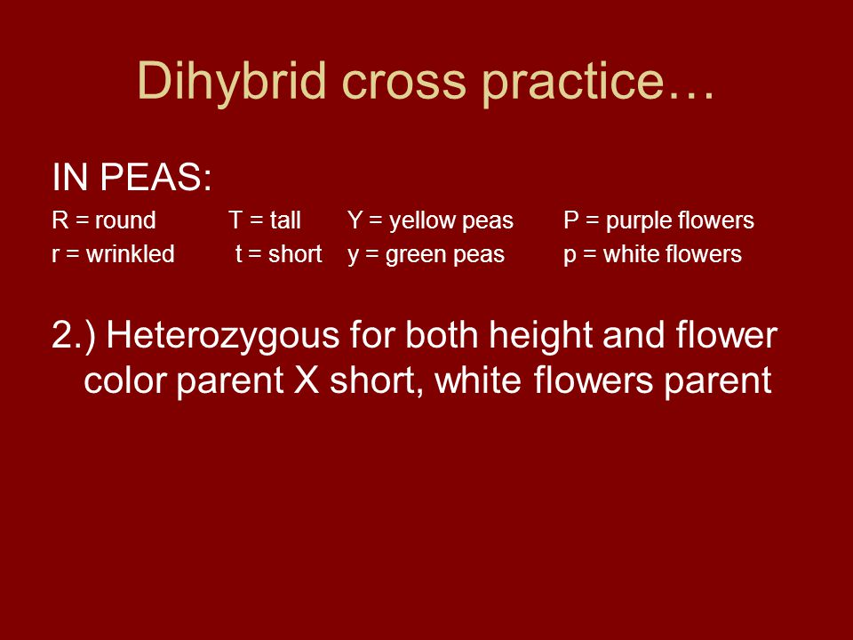 Dihybrid cross practice…