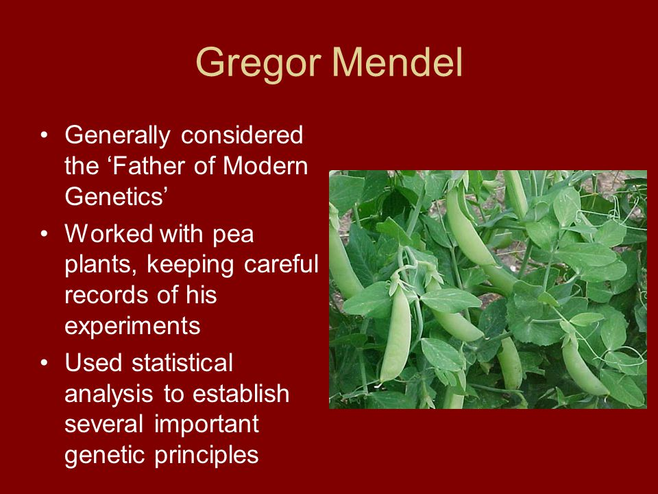 Gregor Mendel Generally considered the 'Father of Modern Genetics'
