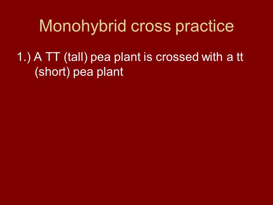 Monohybrid cross practice