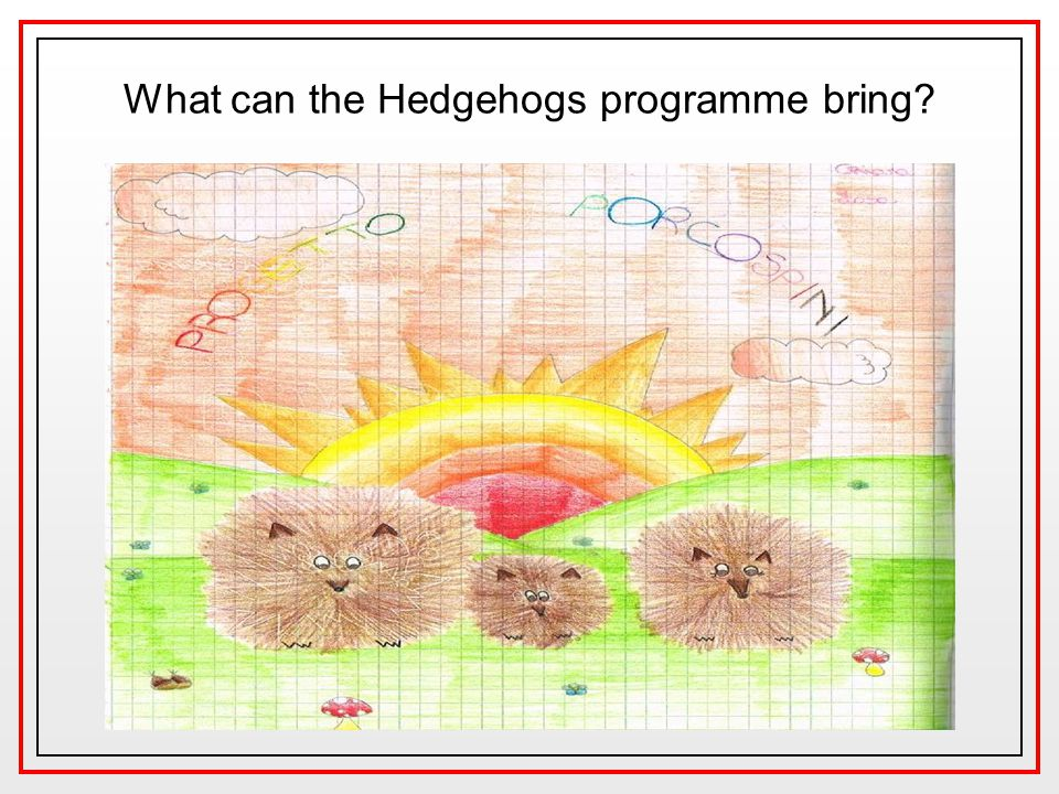 What can the Hedgehogs programme bring