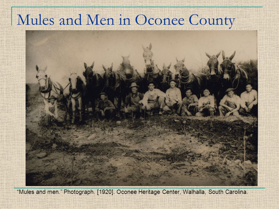 Mules and Men in Oconee County