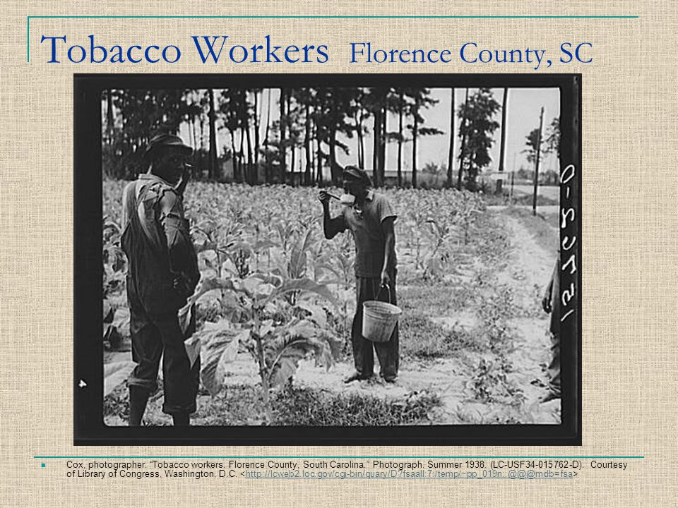 Tobacco Workers Florence County, SC