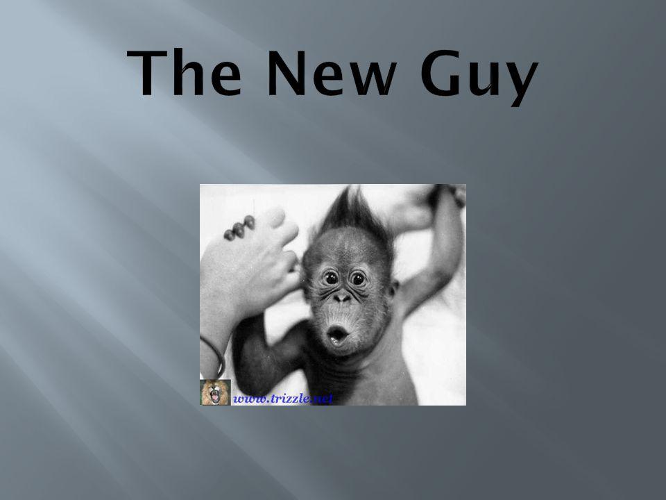The New Guy Vas-y Louis, tu tiens le bon bout.