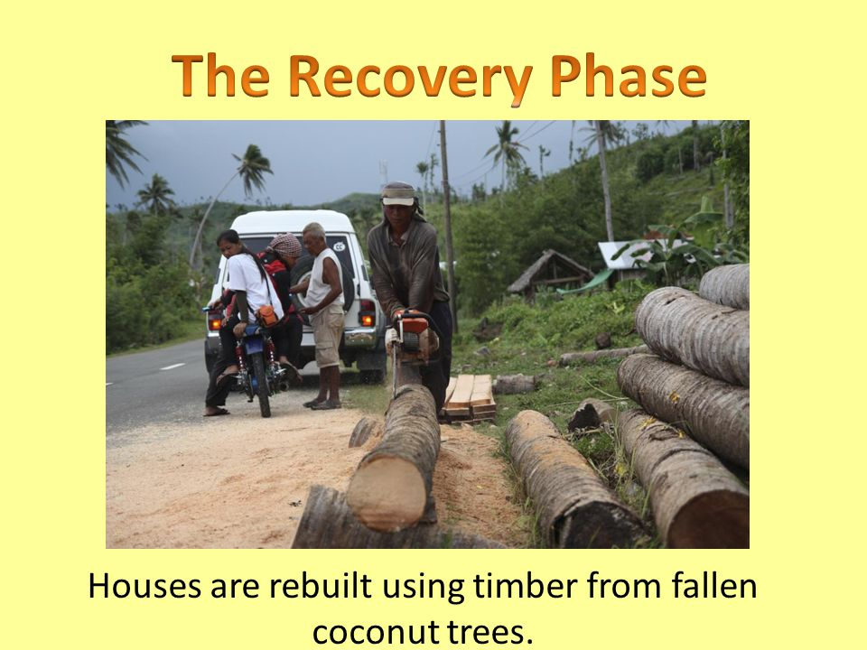 Houses are rebuilt using timber from fallen coconut trees.