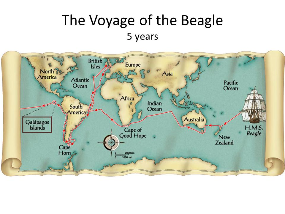 The Voyage of the Beagle 5 years
