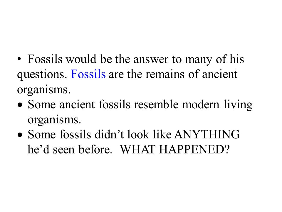 Fossils would be the answer to many of his questions