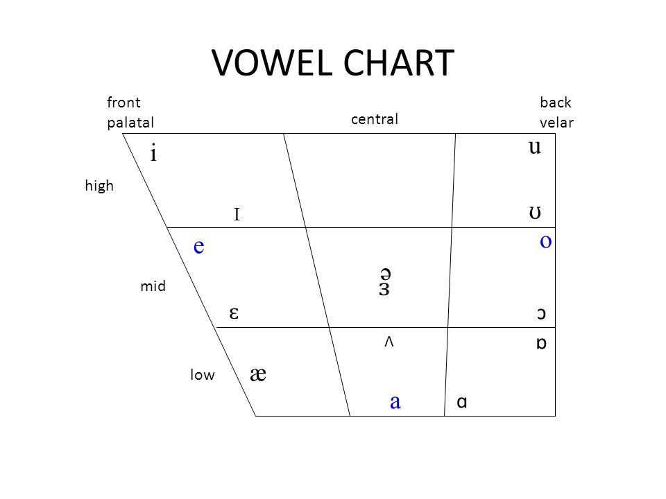 VOWEL CHART u i ʊ o e ə ɜ æ a ɛ ɔ ɒ ɑ I front palatal back velar