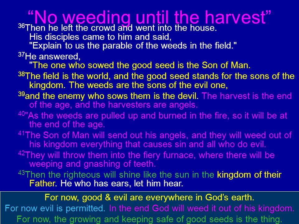 No weeding until the harvest