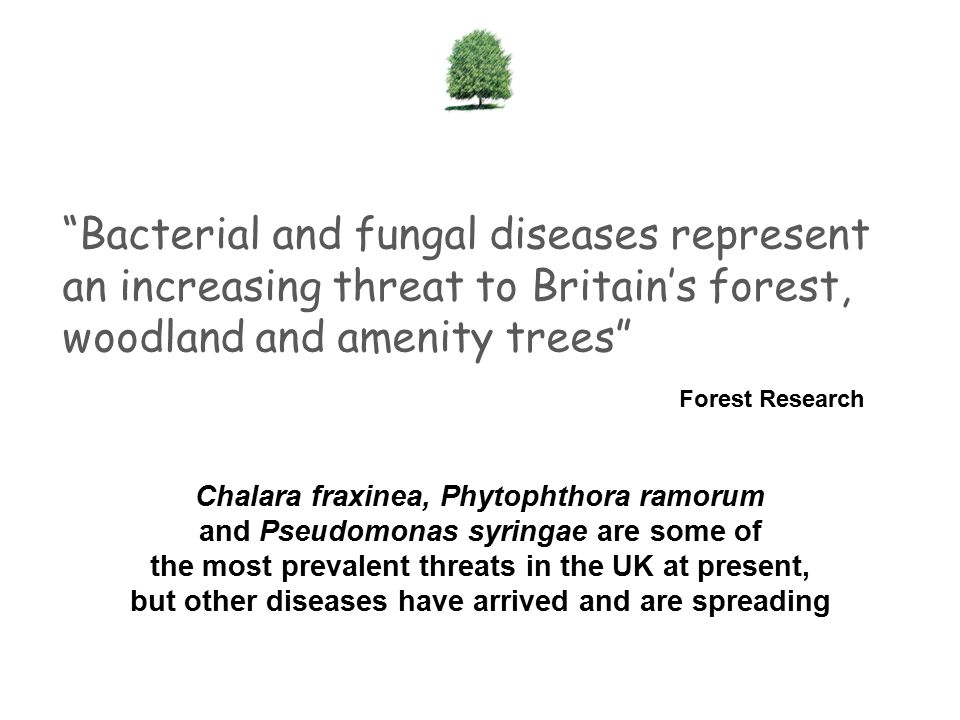 Bacterial and fungal diseases represent an increasing threat to Britain's forest, woodland and amenity trees