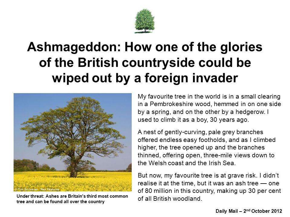 Ashmageddon: How one of the glories of the British countryside could be wiped out by a foreign invader