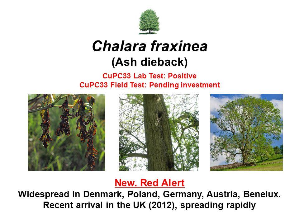 Chalara fraxinea (Ash dieback)
