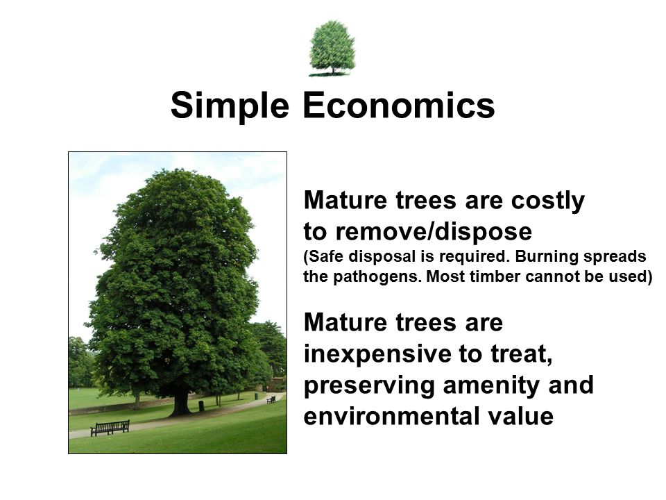 Simple Economics Mature trees are costly to remove/dispose (Safe disposal is required. Burning spreads the pathogens. Most timber cannot be used)